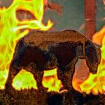Fire Pit Bear